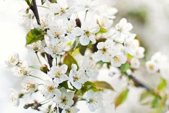 sesje wiosenne w krakowie